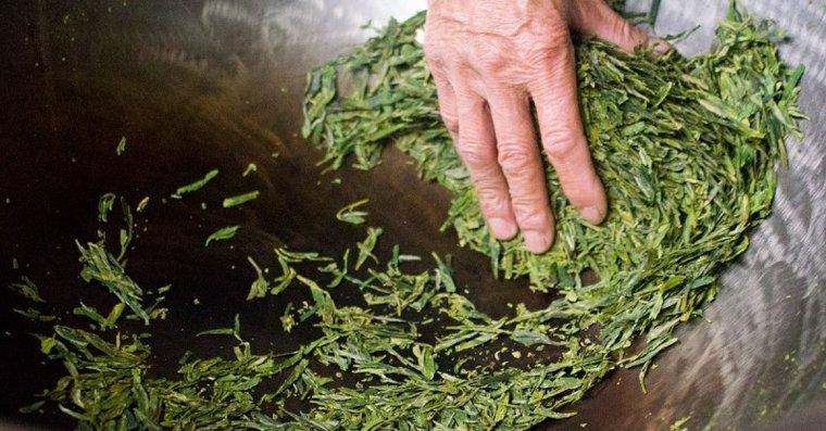 té verde hojas