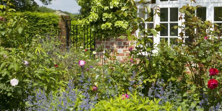 garden-vegetation