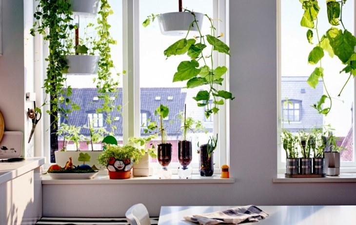 alfeizar plantas jardines interiores