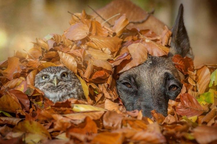 amistad-animales-ingo-poldi-resized