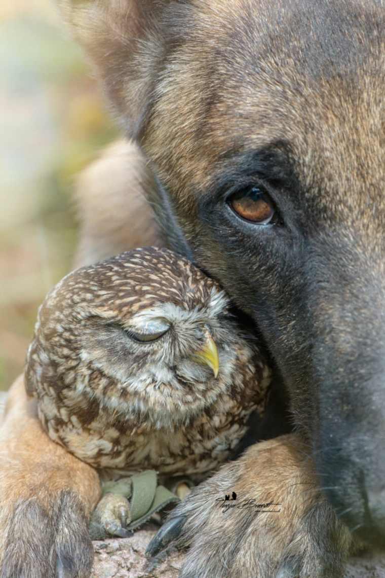 amistad perro-buho-ingo-poldi