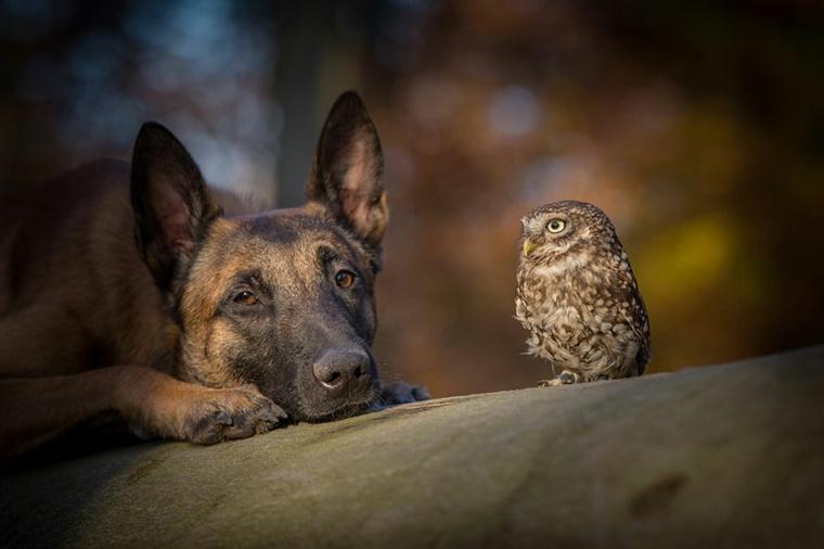 amistad verdadera-animales-ingo-poldi