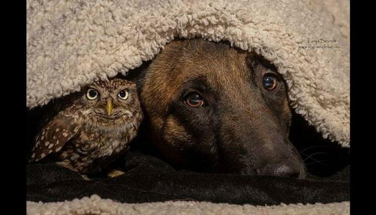 amistad verdadera-perro-buho