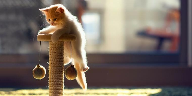 arbol de gatos-pequenos-casa