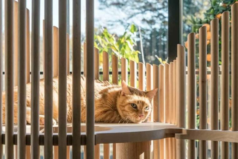 arbol rascador para gatos-caseros