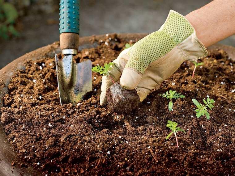 cultivo-plantas-opciones-suelo-ideas-abono