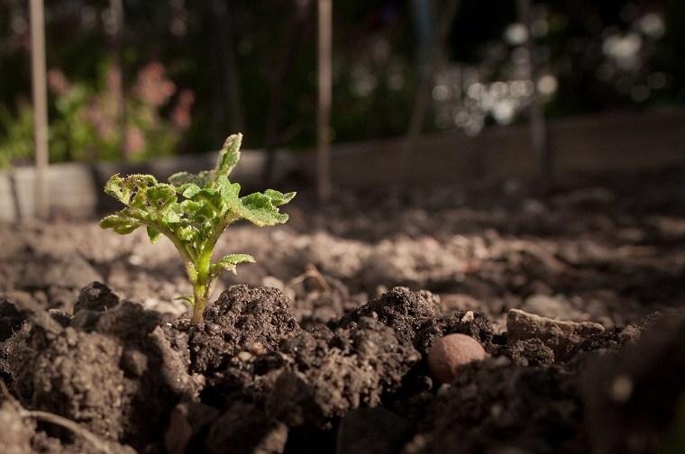 cultivo-plantas-opciones-suelo-ideas