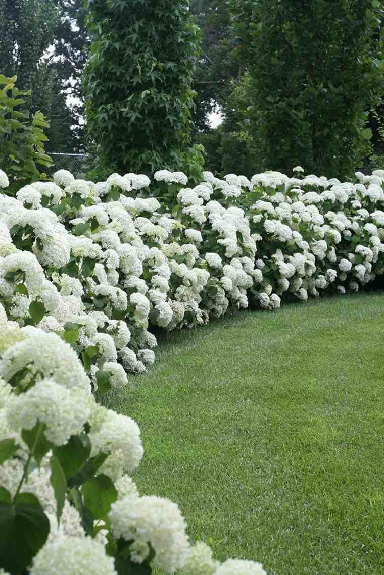 cercas de setos y arbustos