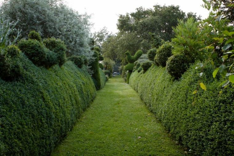 ideas para cercas de setos y arbustos