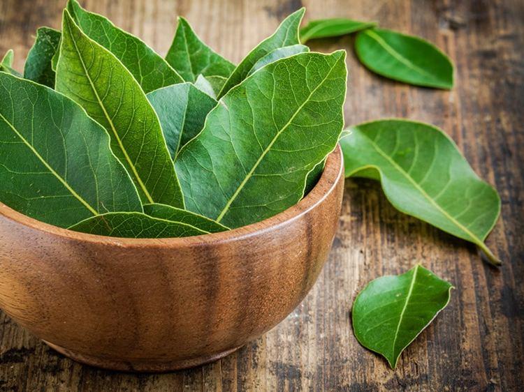 hojas-verdes-frescas-especies
