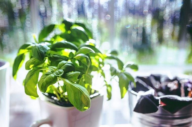 huerto-en-casa-ideas-originales-albahaca'cultivo