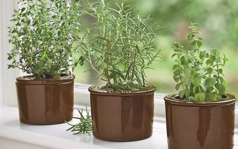 huerto-en-casa-ideas-originales-cultivar-albahaca