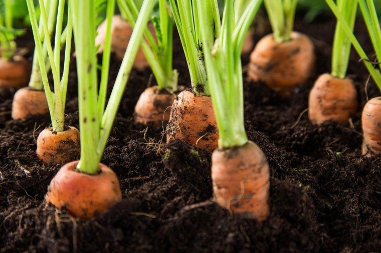 huerto en casa-ideas-originales-zanahorias