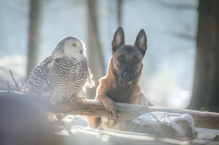 imagenes de amistad-ingo-poldi