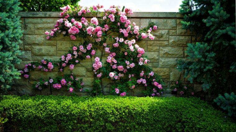 consejos para cercas de setos y arbustos