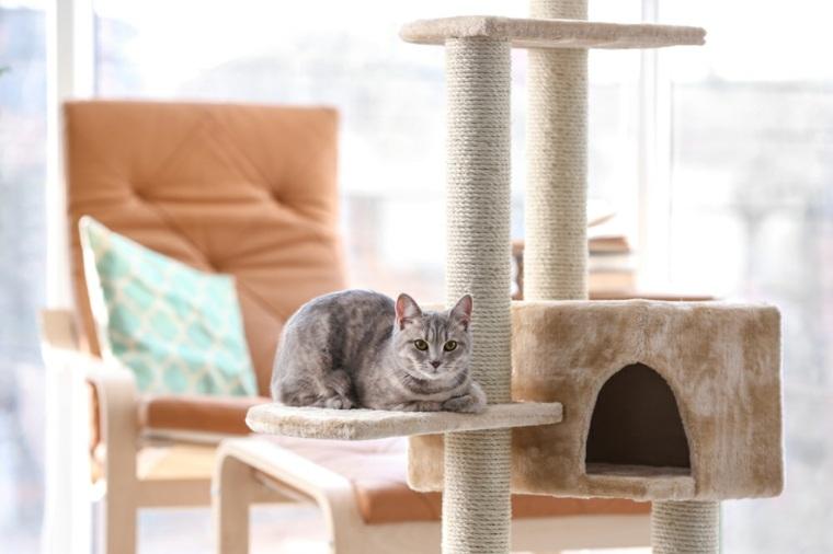 informacion sobre los gatos-personalidad