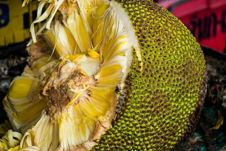 jackfruit maduro-cortado