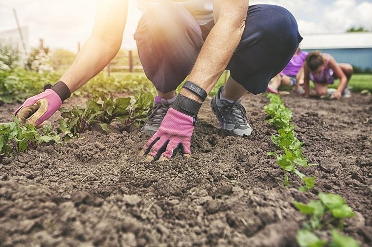 jardines-de-casas-consejo-eleccion-plantas-opciones