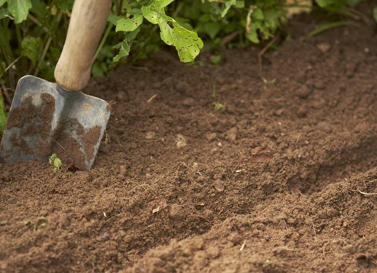 jardines-de-casas-consejo-eleccion-plantas-suelo