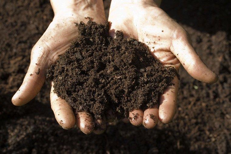 jardines-de-casas-consejo-suelo-plantas-opciones