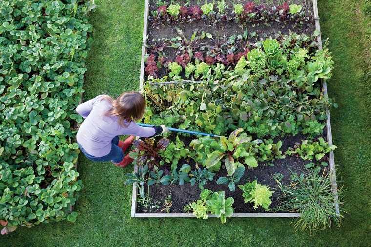 jardines de casas-materiales-opciones-principiantes