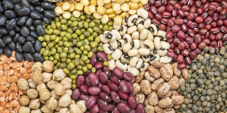 legumbres-especies-diferentes