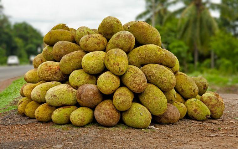 monton-de-jackfruits