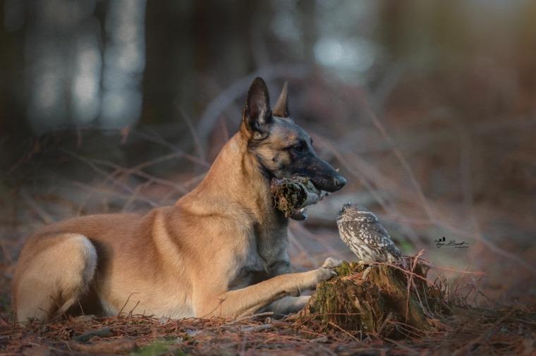 perro fiel-ingo-amigo-poldi