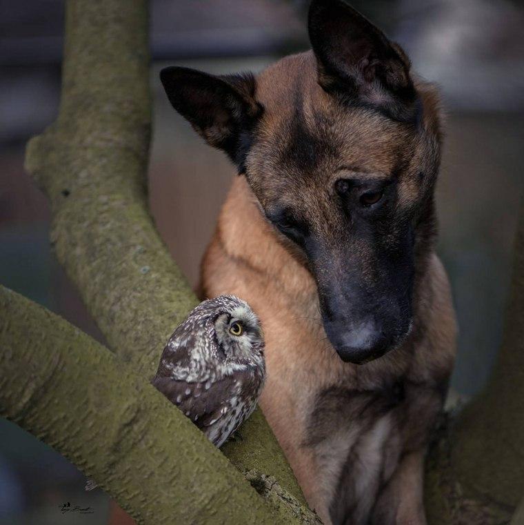perros amistad-buho-poldi