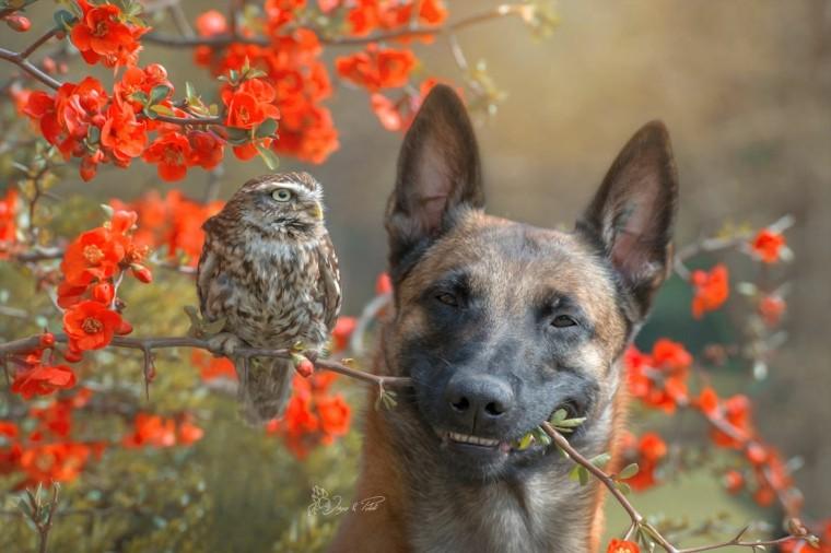 perros buhos-amistad-verdadera