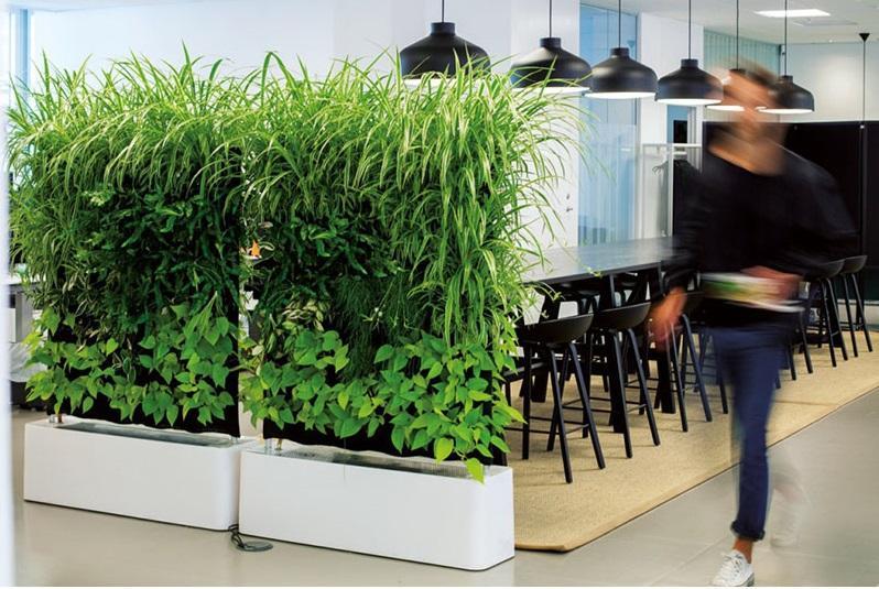 plantas-division-especiales-casas