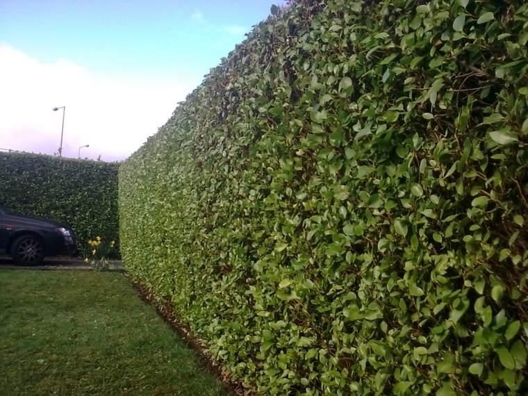 cómo mantener arbustos de jardín