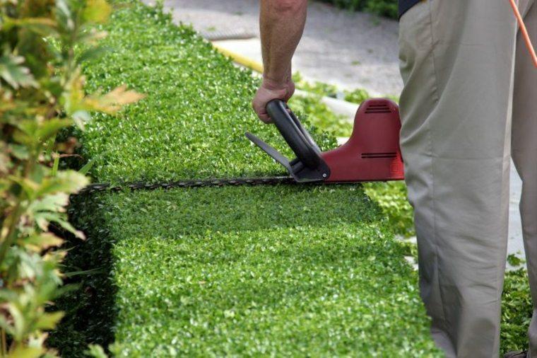cómo cuidar los setos de jardín