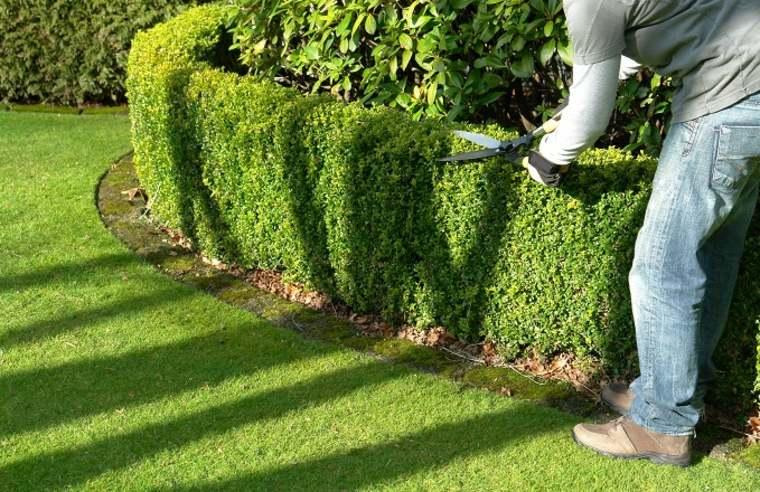 cómo mantener setos de jardín
