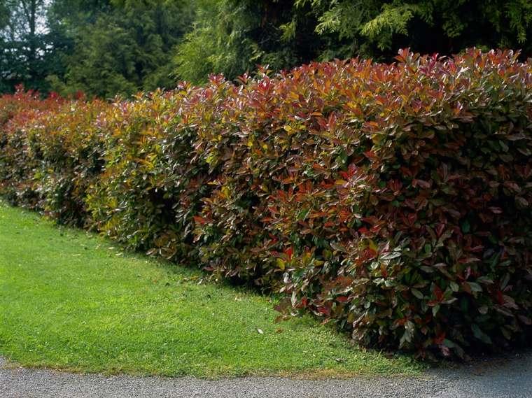 Los arbustos con flores se ven mejor en setos informales