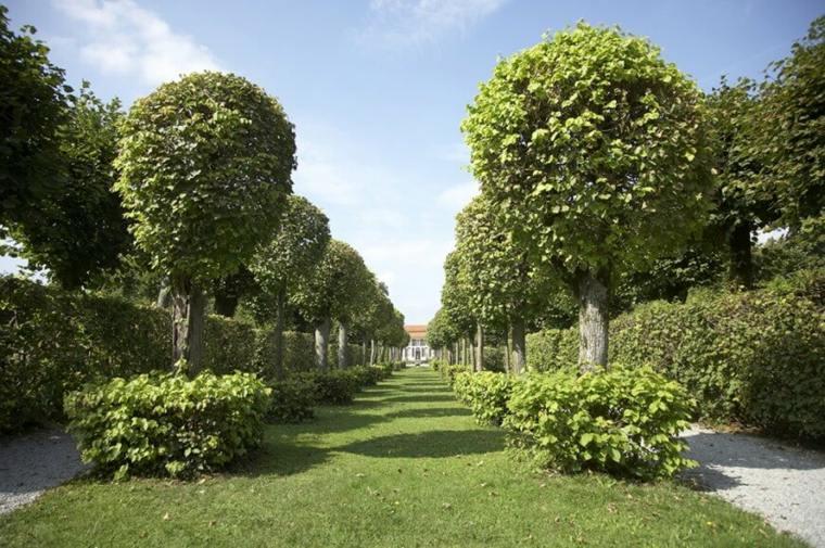 consejos para mantener cercas de setos y arbustos