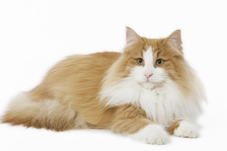 un-gato-bonito
