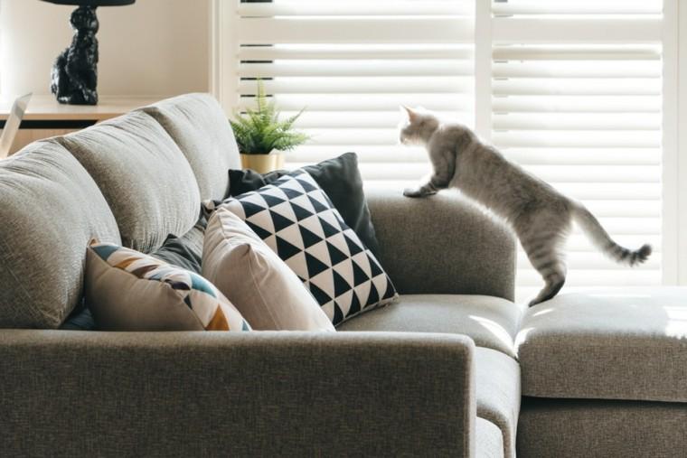 un gato en-el-sofa