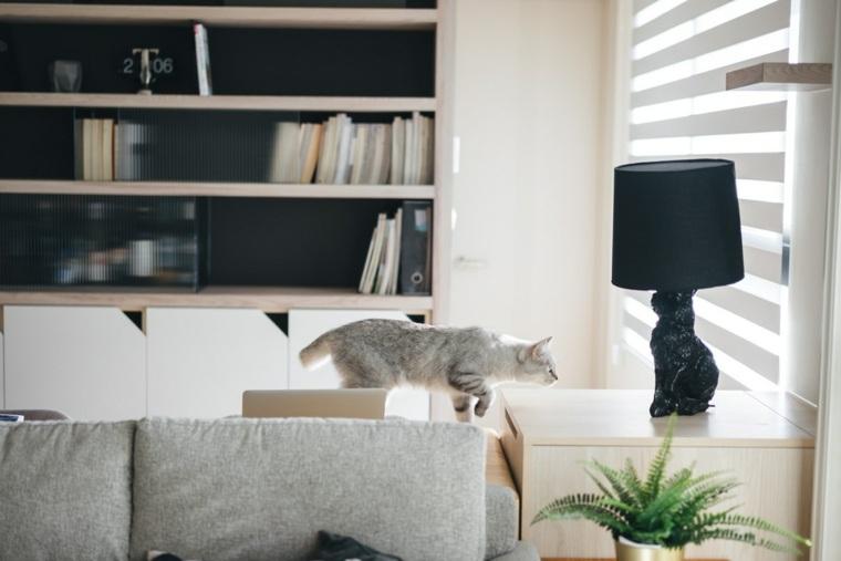 un gato en-su-casa