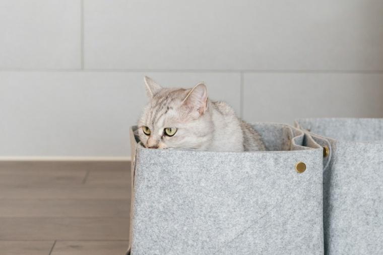 un gato en-una-caja