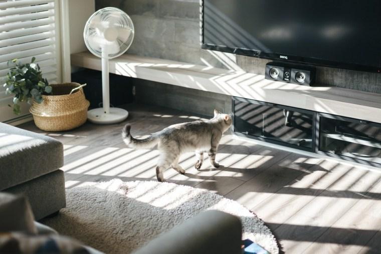 un gato frente-al-tv