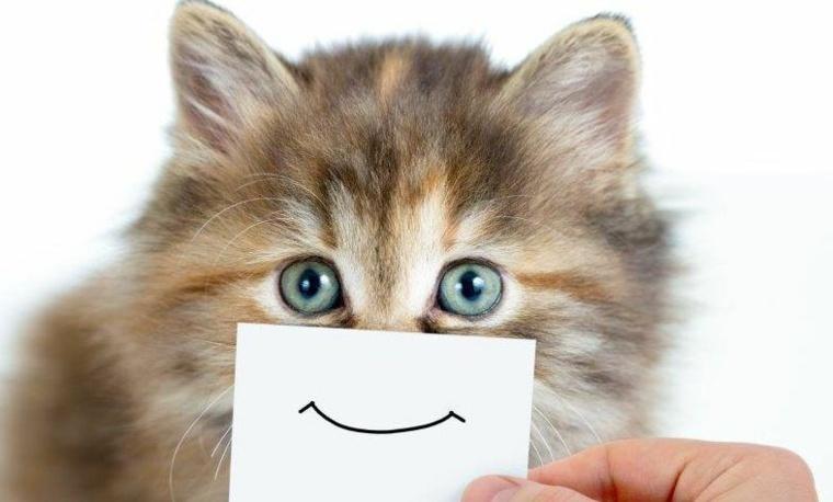 un gato sonriente