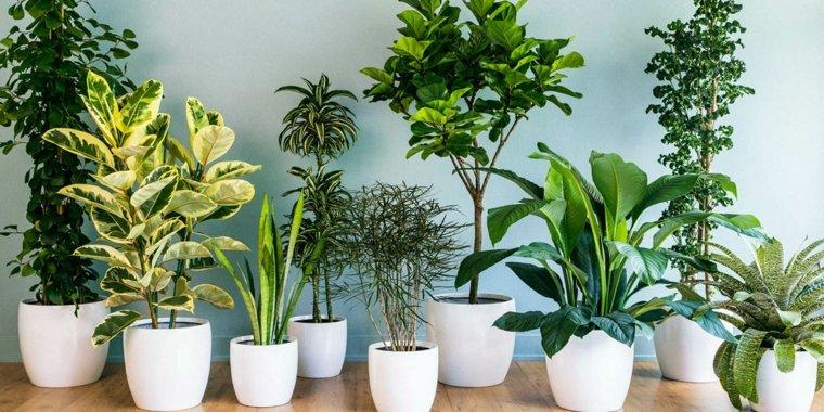 plantas-que-purifican-el-aire