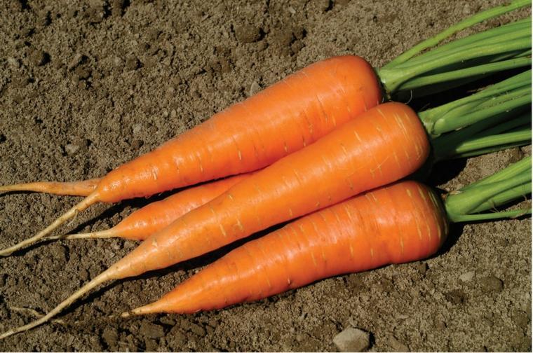 beneficios de la zanahoria-cultivo-casero
