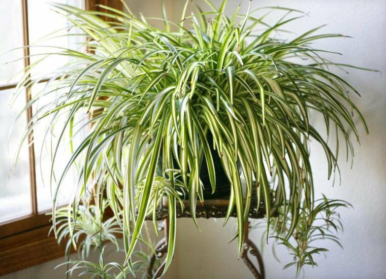calidad del aire planta-araña