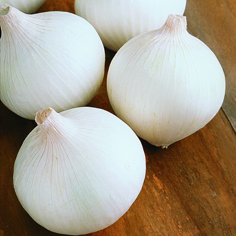 cebolla blanca-plantacion-cuidados-casa