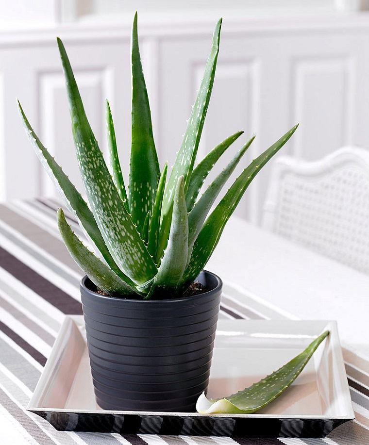 especias-de-plantas-bano-aloe-vera-opciones