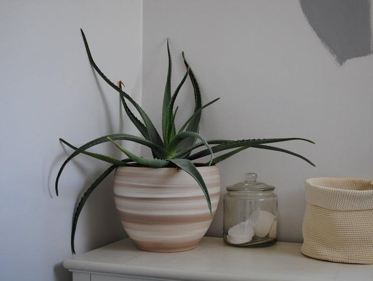 especias-de-plantas-bano-opciones-aloe-vera