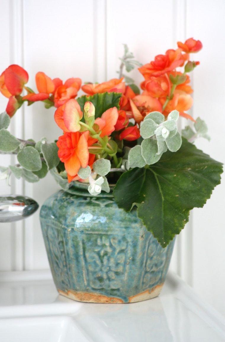 especias-de-plantas-bano-opciones-begonia