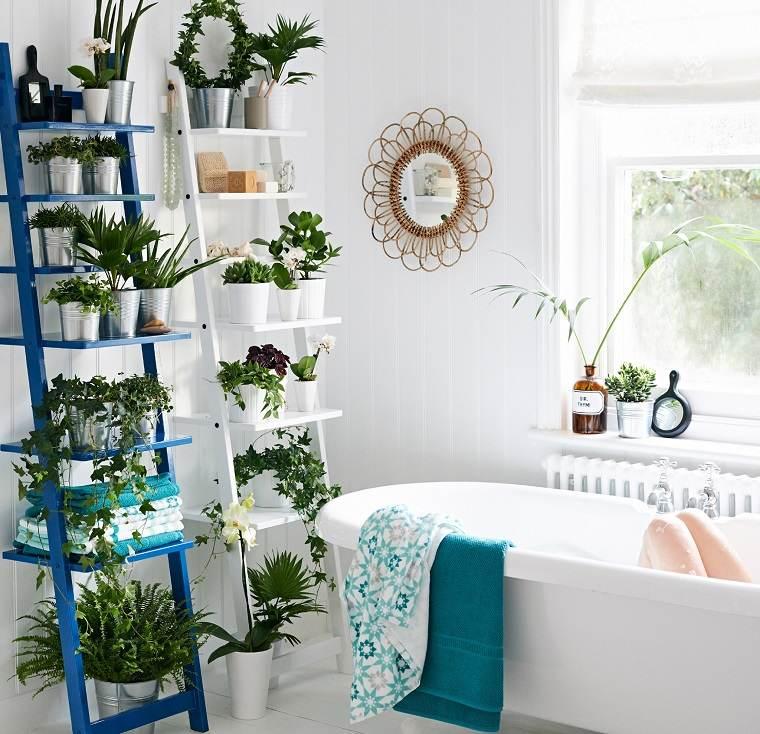 especias de plantas-bano-opciones-macetas